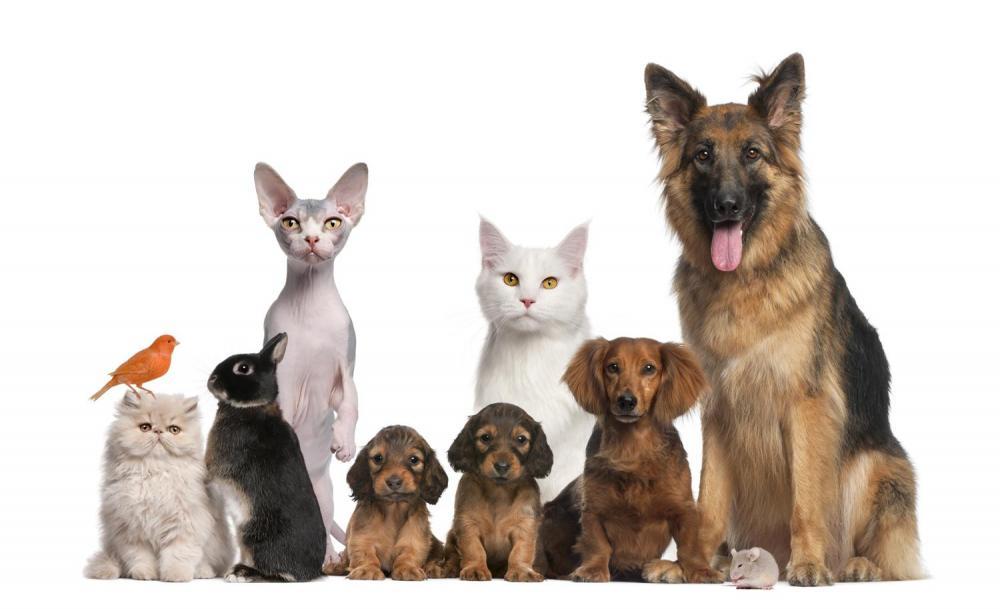 Започва трета кампания за овладяване популацията на бездомни кучета  в община Ботевград