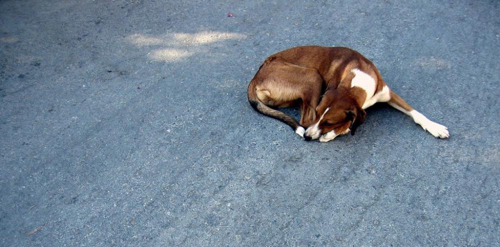 """Предстояща беседа на тема """"Ролята на кастрираните безстопанствени кучета за овладяване на уличната популация"""""""